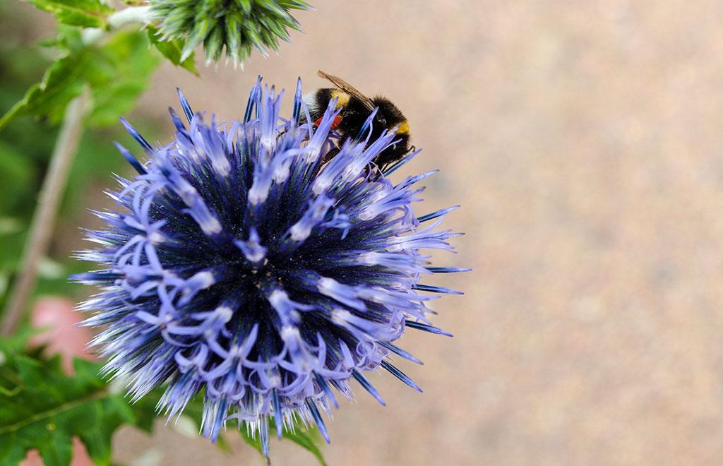 WILDBIENEN UND NÜTZLINGE – unsere tierischen Helfer im Garten