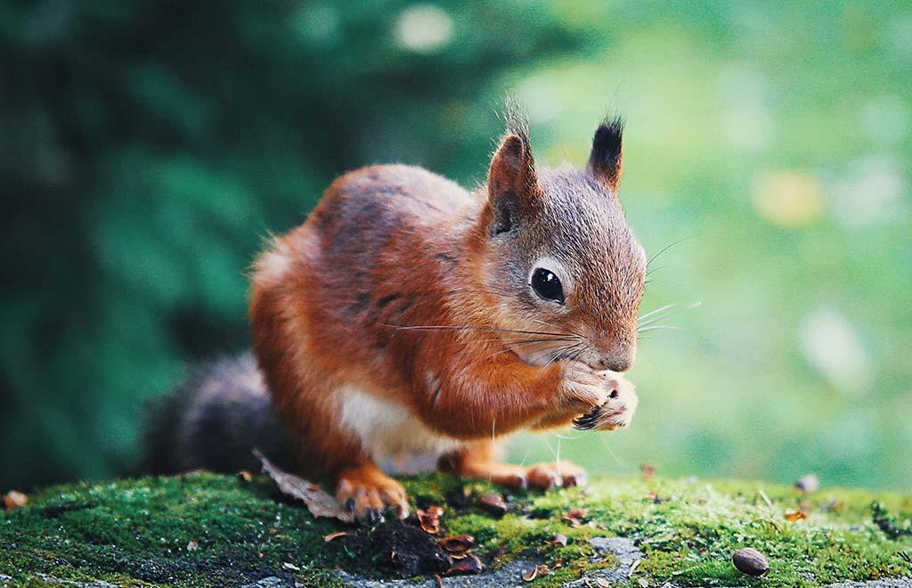 NÜSSE – Eichhörnchens Lieblinge