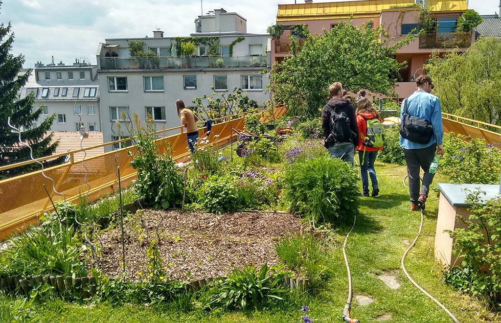 URBAN GARDENING – Gemüsevielfalt auf Balkon und Terrasse