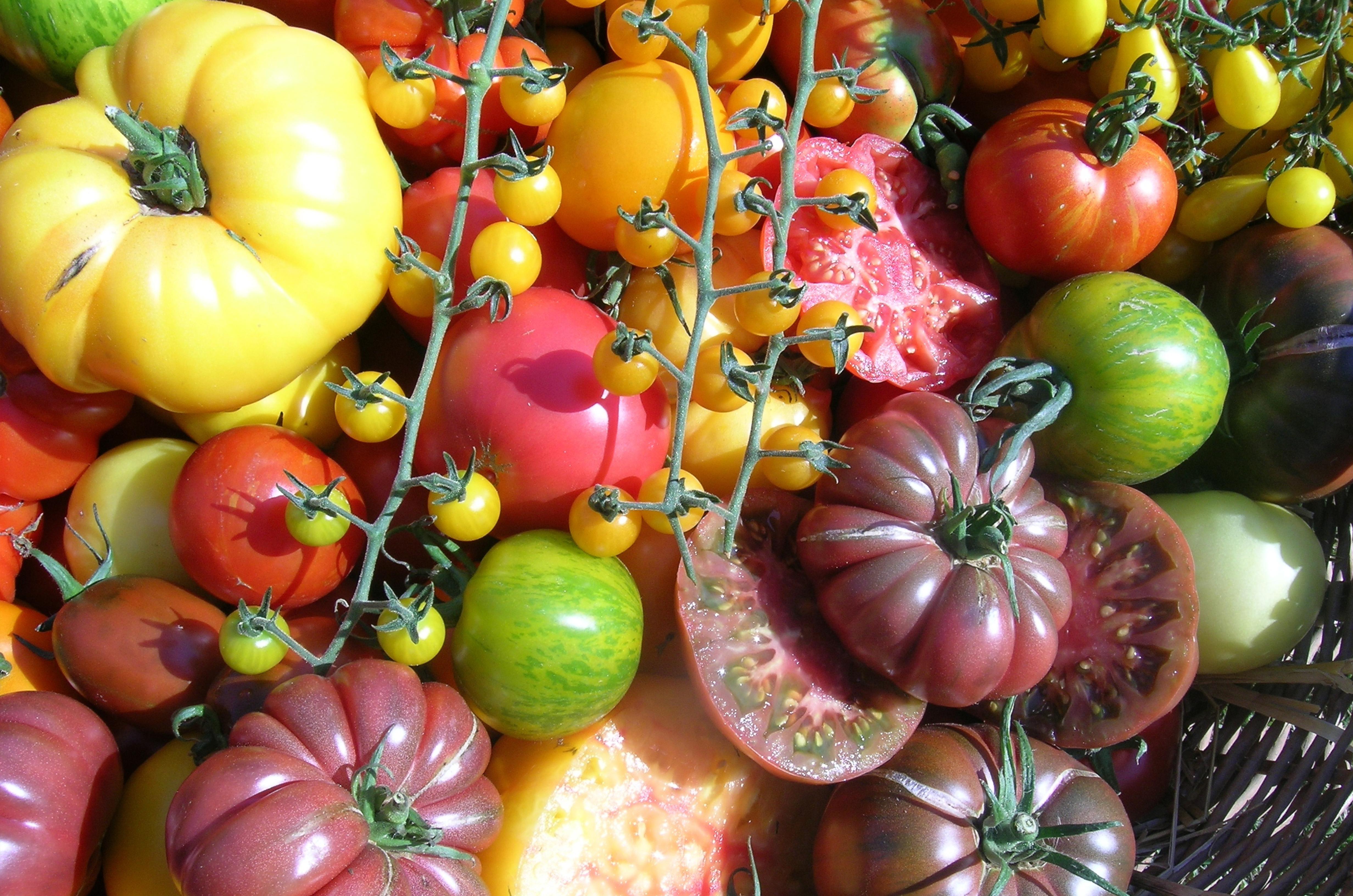 PARADEISERVIELFALT – Gartenerlebnisführung und Verkostung