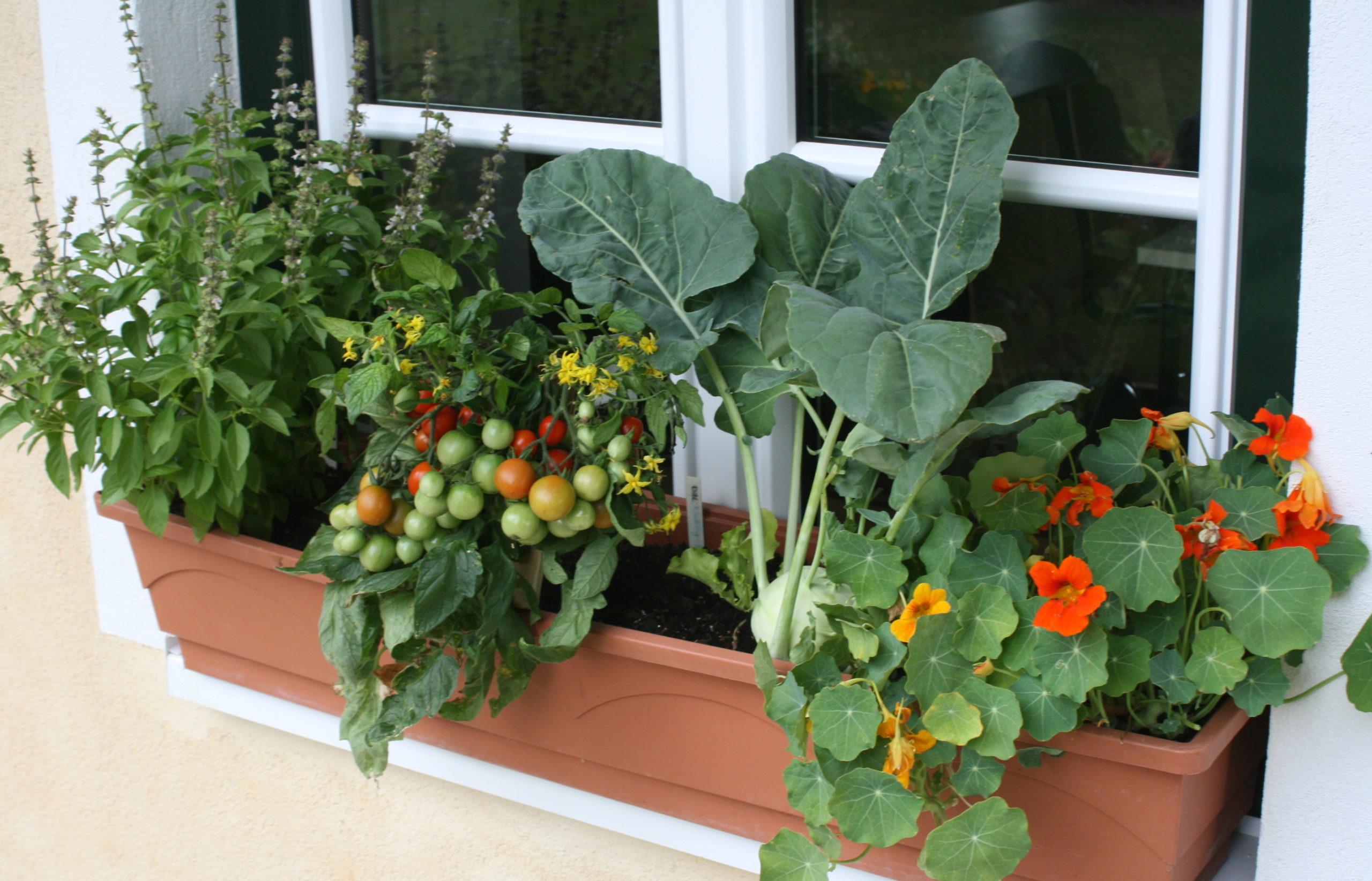 Ersatztermin URBAN GARDENING - Gemüsevielfalt auf Balkon und Terrasse